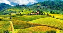 Weingut in der Toskana